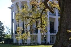 Spanisches Moos in einem Baum mit südlicher Villa im Hintergrund Lizenzfreie Stockbilder