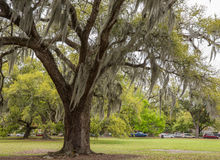 Spanisches Moos in New- Orleanspark Stockfotografie