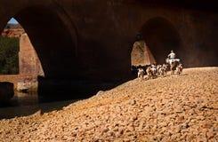 Spanisches Vieh - Ziege auf Methode zu bewirtschaften Lizenzfreies Stockbild