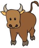Spanish Bull Stock Photo