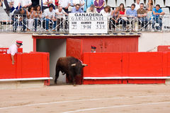 Spanish bullfight Stock Photography