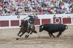 Spanish bullfighter on horseback Diego Ventura bullfighting on h Stock Photography