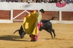 The Spanish Bullfighter Sebastian Castella bullfighting with the. Andujar, Spain - September 12, 2008: The Spanish Bullfighter Sebastian Castella bullfighting Royalty Free Stock Photos