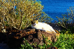 Spanish cat near the ocean Royalty Free Stock Photography