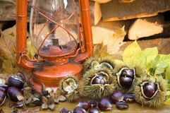Spanish Chestnuts still life with a Kerosene Lamp. Still life with Spanish chestnuts and an old orange Kerosene lamp. In the back there are maple leaves and Stock Image