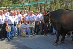 Spanish choir singing to a bull. Royalty Free Stock Photo