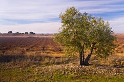 Spanish Countryside Royalty Free Stock Photography