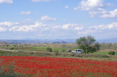 Spanish countryside. With blossoming poppies Stock Images