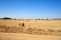 Spanish countryside Stock Photo
