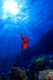 Spanish Dancer fly in blue to sun royalty free stock photos