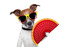 Spanish dog stock image