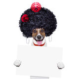 Spanish dog Stock Images