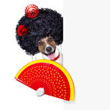 Spanish dog Royalty Free Stock Image