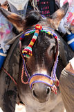 Spanish Donkey on beach in Spain. Colourful Spanish Donkey on hot sunny beach in Spain Stock Photos