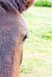 Spanish Donkey half portrait Royalty Free Stock Photo