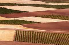 Spanish fields Stock Images