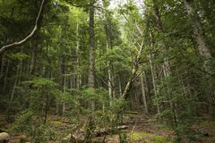 Spanish forest in `Cola de Caballo`. A beautiful Spanish forest in `Cola de Caballo`, Aragon, Spain stock photo