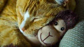 Orange cat cuddling with adorable sock monkey stock photos