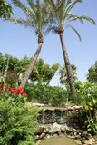Spanish garden with a waterfall, palm trees, & flowers Royalty Free Stock Photos