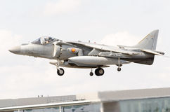 Spanish Harrier Royalty Free Stock Photography