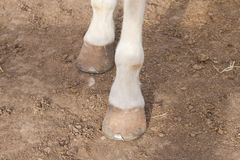 Spanish horse Stock Photo
