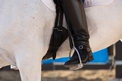 Spanish Horse Stock Photography