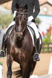 Spanish Horse Stock Photo