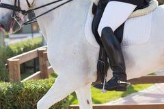 Spanish Horse Royalty Free Stock Image