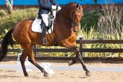 Spanish Horse Royalty Free Stock Photo