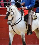 Spanish horse in spectacle. Beautiful spanish horse in spectacle in spain Royalty Free Stock Photo