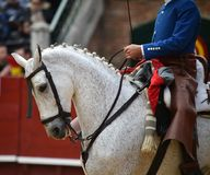 Spanish horse in spectacle. Beautiful spanish horse in spectacle in spain Stock Images