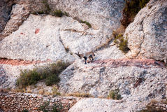 Spanish Ibex, Capra pyrenaica in the mountains Stock Photo