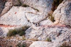 Spanish Ibex, Capra pyrenaica in the mountains Stock Photo