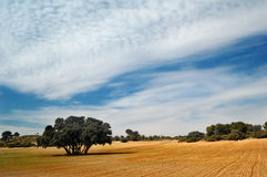 Spanish landscape Stock Photography