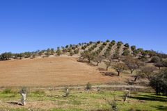 Spanish landscape with Andalusian olive groves Stock Photo