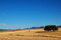 Spanish landscape with oaks Royalty Free Stock Image