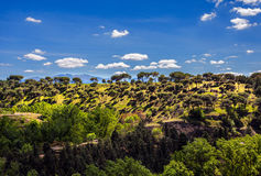 Spanish landscape. Wood. Royalty Free Stock Images