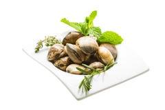 Spanish mollusc - Almeja Royalty Free Stock Image