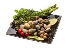 Spanish mollusc - Almeja Stock Image