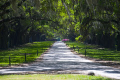 Spanish Moss Alley. Entrance of a park with trees covered with Spanish Moss Royalty Free Stock Photography