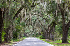 Free Spanish Moss And Live Oak Trees Stock Photography - 28413422