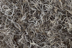 Spanish moss background Royalty Free Stock Photos