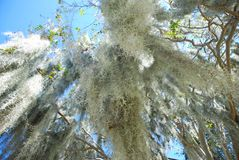 Spanish Moss in Beaufort South Carolina Stock Photo
