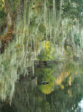 Spanish Moss Draped Trees on the Bank of Southern Stream Royalty Free Stock Photo