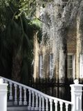 Spanish Moss Dripping from Trees stock image