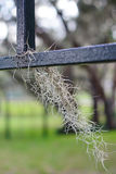 Spanish moss in fence Royalty Free Stock Photography