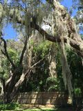 Spanish Moss and Fence. Moss found in LiveOak Florida Royalty Free Stock Photos