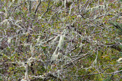 Spanish moss growing on tree Stock Images