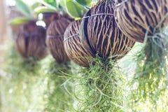Spanish Moss hanging . Stock Photos