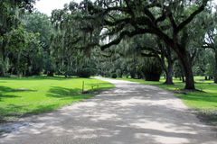 Spanish Moss Hanging from Trees along a Road Royalty Free Stock Image